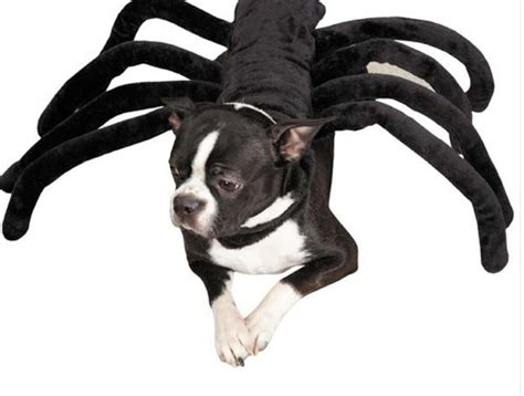 spider costume for dogs 10 costumes for dogs cowboy magic