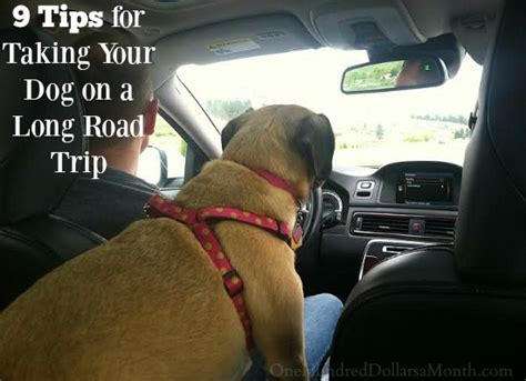 how to make a long road trip more comfortable 9 tips for taking your dog on a long road trip