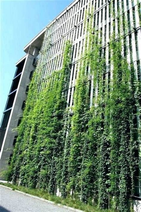 outdoor living wall plants green wall design green