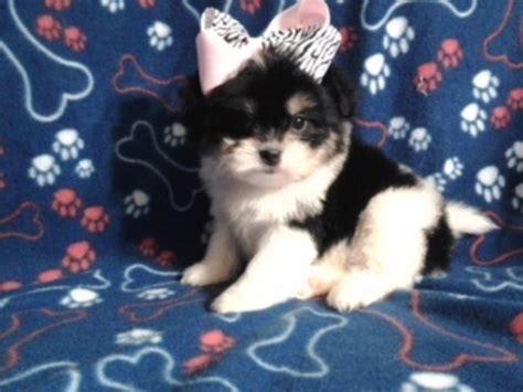 puppies for sale in ruston la pets ruston la free classified ads