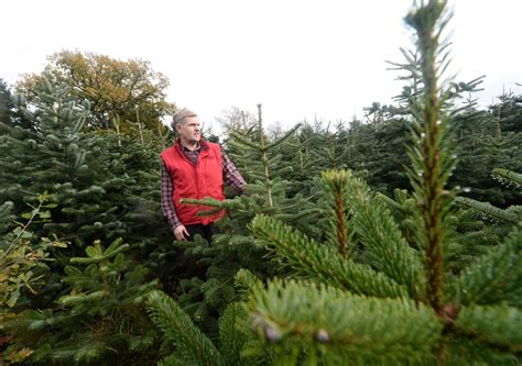 woods farm christmas trees birmingham live