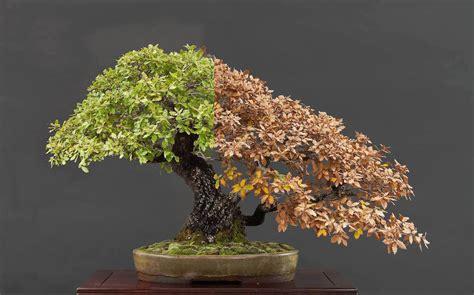when do trees go on sale choosing a bonsai pot for your tree bonsai empire