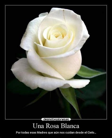 imagen de una hermosa rosa blanca para whatsapp una rosa blanca desmotivaciones