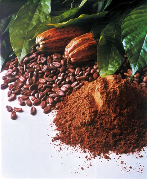 Pupuk Buah Hormonik 100 cara budidaya tanaman coklat atau kakao design bild