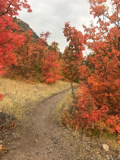 what causes leaves to change color in the fall what causes autumn leaves to change color sanpete