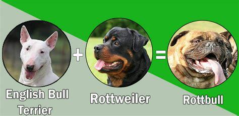 top 100 rottweiler names top 10 rottweiler cross breeds mix breeds