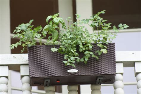 Planters For Balcony Railings by Do More With Less On A Balcony Garden Timber Press