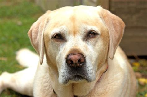 why do dogs their nose why do noses change colors pet care facts