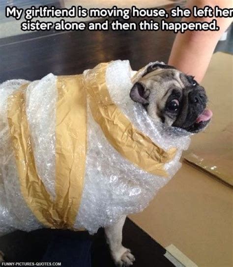 pug hilarious pug quotes and sayings quotesgram