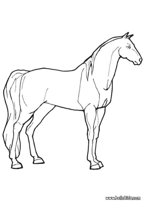 coloring pages of real horses real coloring pages coloring home