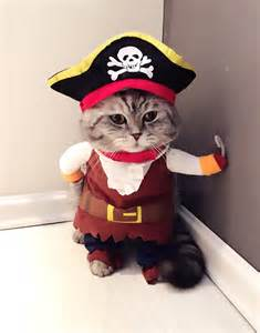 Pirate Themed Home Decor pirate cat costume turn your cat into a pirate with this