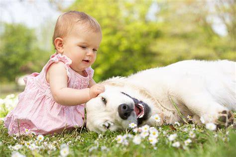 dogs and babies allergies in infants symptoms causes and treatments