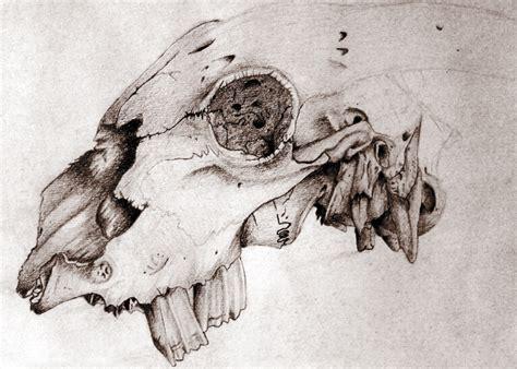 tattoo ink animal bones animal skull by yoshigizmo on deviantart