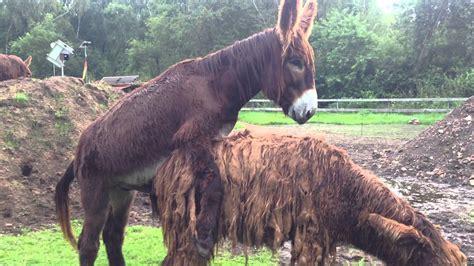 decken kaufen pferd decken haus renovieren