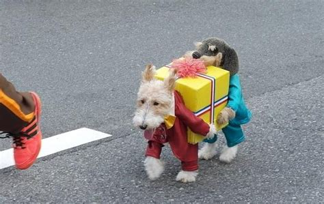 top pet gifts dog dressed as two dogs holding a present boing boing