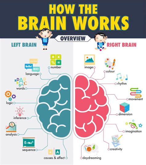how our brain works 9gag