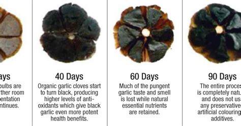 Bawang Hitam Herbal B Aswad kesehatan dan kecantikan alami keajaiban black garlic