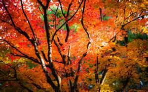 What Colors Make Yellow momiji in nikko by burningmonk on deviantart