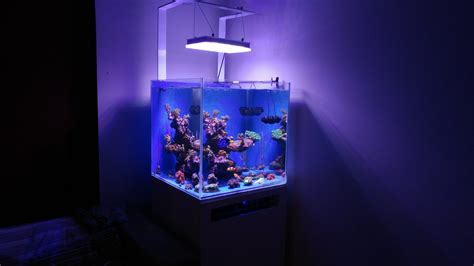 nano reef aquarium lighting beautiful nano reef tank display from greece under