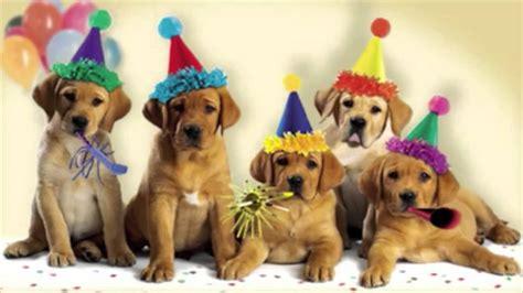 puppy singing happy birthday happy birthday dogs singing