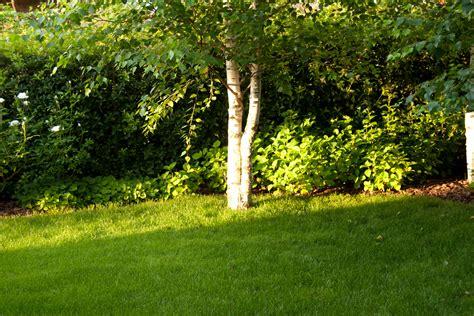 il giardino the la villa e il giardino fra voglia di fiori e bisogno di