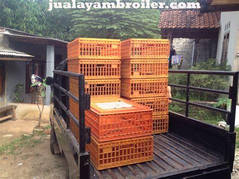 Bibit Ayam Potong Di Bogor jual ayam broiler di gunung putri bogor jual ayam broiler