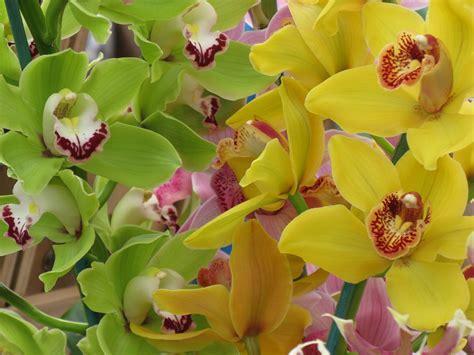 imagenes de orquideas verdes foto gratis orqu 237 deas orqu 237 dea flor tropical imagen