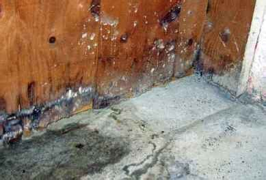 white mold in basement types health risks removal