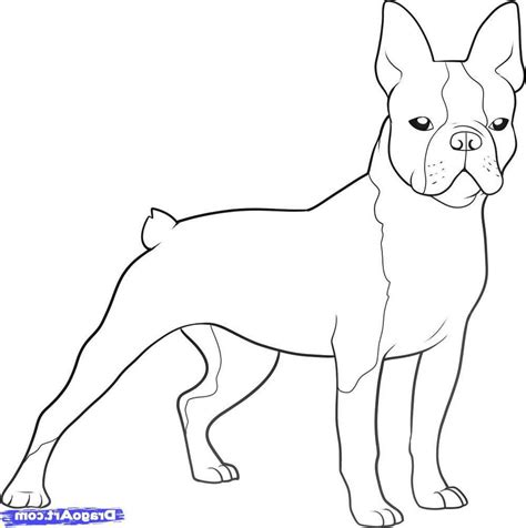 boston terrier coloring page boston terrier coloring pages printable coloring page