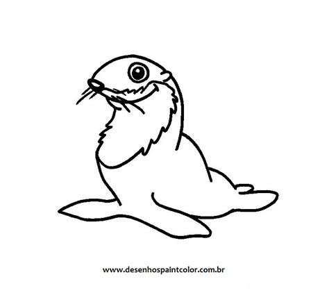 imagenes para colorear foca desenho de foca para imprimir az dibujos para colorear