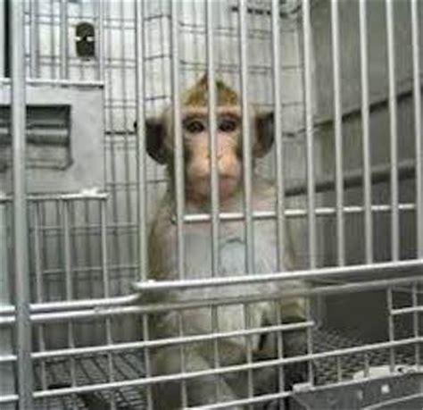 oppose terrible monkey altruism experiments   creaturesorg action alert