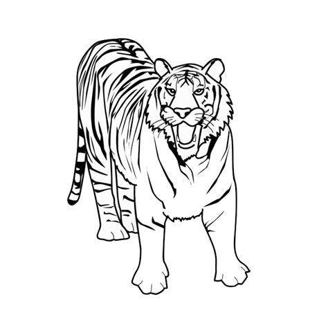 Tigre Blanc Trendyyy Com