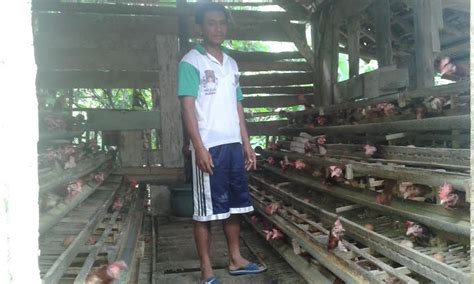 Bibit Lele Sangkuriang Kediri ternak sapi bandung investasi ternak ayam