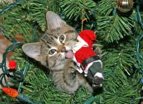 amazing how to keep cats out of christmas tree do i my cat