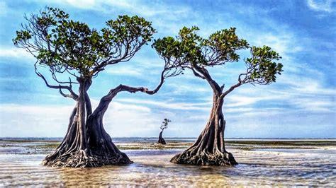 walakiri beach sumba timur nttindonesia ntt natural