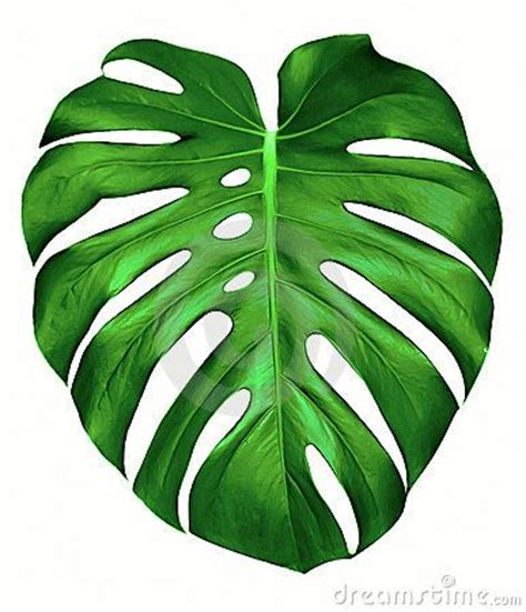 printable green leaves monstera leaves hawaiian quilts pinterest leaf