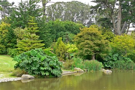 Botanical Garden In San Francisco San Francisco Botanical Garden S Reviews