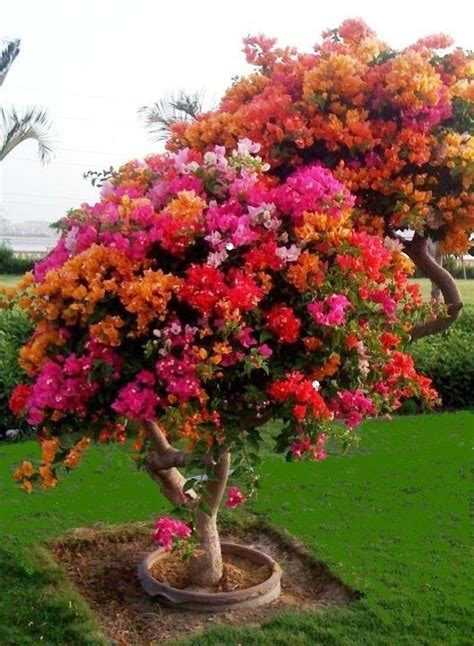 Flowering Trees For Small Gardens Flowers Gardens Garden Plants Flowers Trees