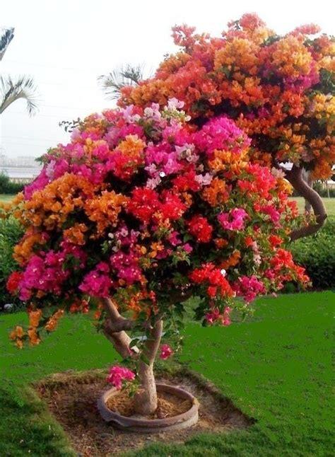 Flowers Gardens: Garden : Plants Flowers Trees