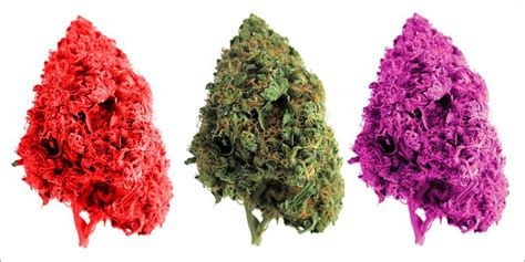 marijuana colors purple green a guide to your bud colors