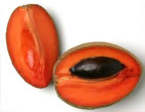 mamey color not all who wander are lost mamey