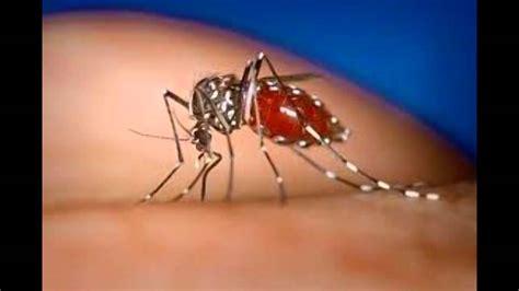 imagenes groseras sobre el chikungunya virus chikungunya youtube