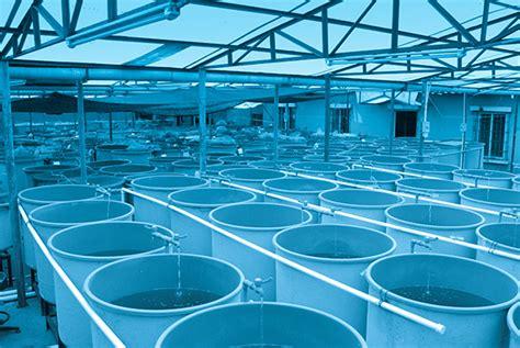 vasche per acquacoltura acquacoltura sostenibile un falso mito