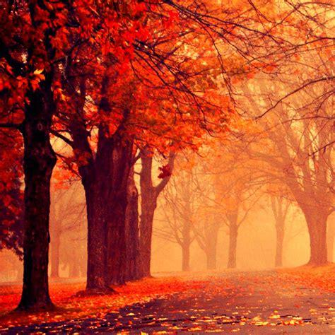 autumn wallpaper  ipad wallpapersafari