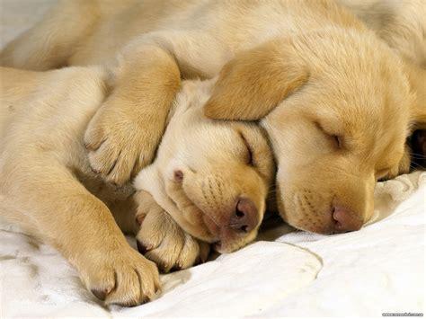 Imagenes Animales Durmiendo   de todo un poco el top 10 de los animales durmiendo