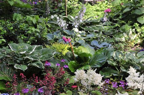 Pflanzen Für Den Schattigen Standort by Schatten