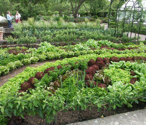 kitchen potager garden k 246 kstr 228 dg 229 rd vegetable gardens