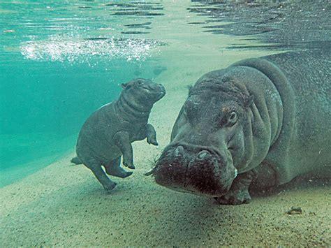 zoologischer garten eintrittspreise berlin tierpark berlin