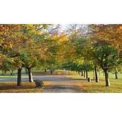 Nature Autumn Desktop Wallpaper Nr 58050 By Big4Ker