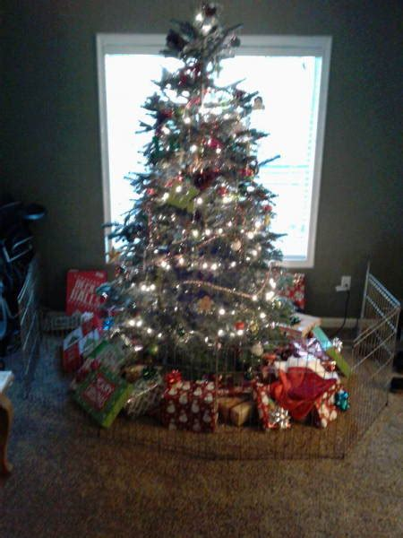 the christmas tree is surely pet safe in these homes 52